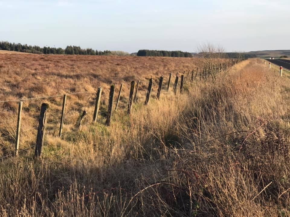 The original concrete boundary posts run the length of the site along side the A696.